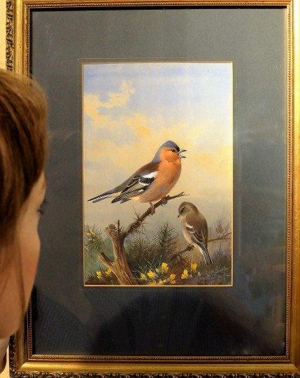 ME WITH CHAFFINCH